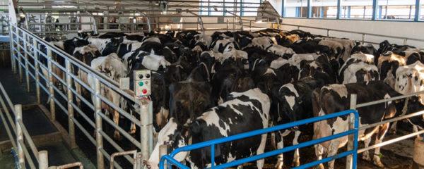 nutrition et la santé animale